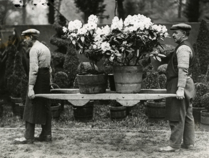 Gardeners-carrying-pots-at-the-Show.-Date-1931.-Credit,-RHS-Lindley-Library