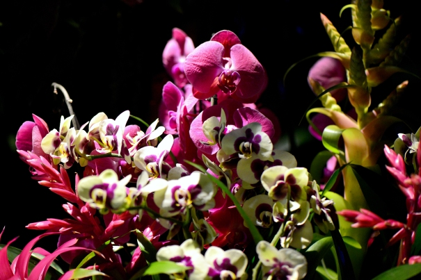 JE_KEW_Orchids15_Lates_5080