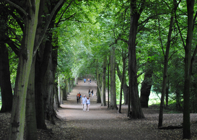 Shady-avenue